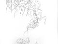 abeille-papillon-enlianes-squelette.jpg